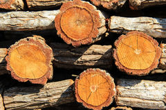 Timber background. Stack of timber stock photo