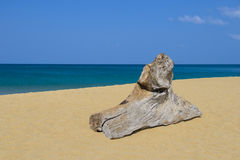 Timber on the beach Royalty Free Stock Photography