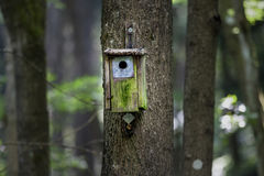 Timber Bird House in the Forest Royalty Free Stock Images