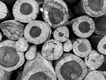 Timber. Black and white of timber for the fire Stock Images