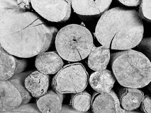 Timber. Black and white of timber for fire Stock Photo