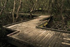 Timber boardwalk through dark mangroves Royalty Free Stock Photos