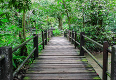 A timber boardwalk leading away Royalty Free Stock Photography