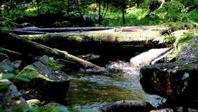 Timber bridge stock footage