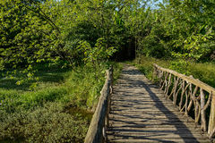 Timber bridge in sunny summer afternoon Royalty Free Stock Photos