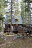 Timber cabin in forest Stock Images