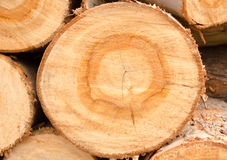 Timber. Close-up Arrange Orderliness  of the timber Royalty Free Stock Photos