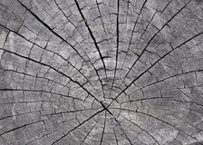 Timber crack,  for background design or  texture Stock Photography