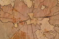 Stump cut texture Royalty Free Stock Photo