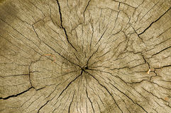Timber cut with cracks Stock Photography