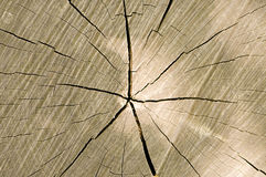 Timber cut with cracks Royalty Free Stock Image