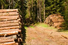 Timber cutting Royalty Free Stock Photo