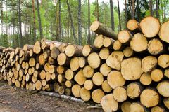 Timber cuttings Royalty Free Stock Photos