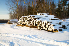 Timber cuttings. The trees cut and combined together. Winter Royalty Free Stock Photography