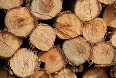 Timber of Eucalyptus tree Royalty Free Stock Image