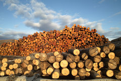 Timber factory Stock Photos