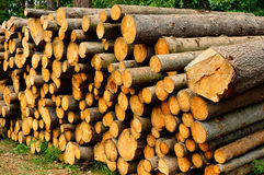 Timber felling prepared to be exported from the forest Stock Image