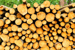 Timber felling prepared to be exported from the forest Stock Photo