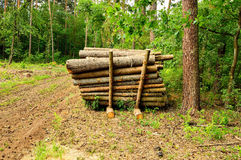 Timber felling prepared to be exported from the forest Royalty Free Stock Image