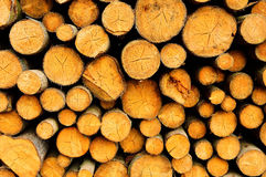 Timber felling prepared to be exported from the forest Stock Photography