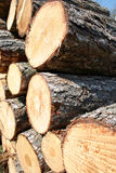 Timber, firewwod. Timber or firewwod close-up royalty free stock photo