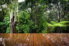 Timber Floor and Jungle Stock Image