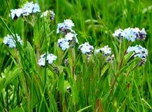 Timber flowerses Stock Image