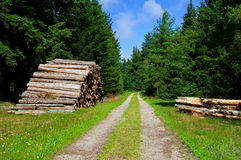 Timber and forest road Royalty Free Stock Photography