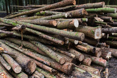 Timber in the forest Royalty Free Stock Image