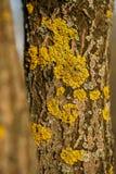 Timber fungus on tree Stock Photos