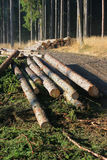 Timber harvesting Stock Photo