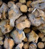 Timber harvesting Stock Image