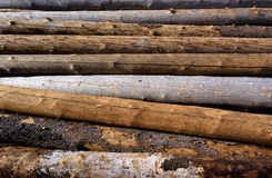 Timber harvesting Royalty Free Stock Images