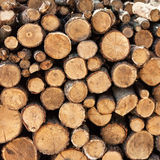 Timber harvesting. Firewood. sunny day Stock Image