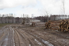 Timber harvesting Royalty Free Stock Photos