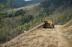 Timber harvesting Royalty Free Stock Photography