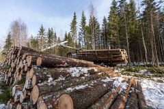 Timber harvesting. Logger working in winter forest Royalty Free Stock Photos