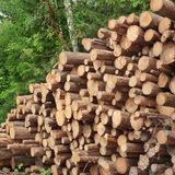 Timber Harvesting For Lumber Industry Or  Wooden Housing Constru Royalty Free Stock Image
