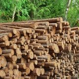 Timber Harvesting For Lumber Industry Or  Wooden Housing Constru Royalty Free Stock Images