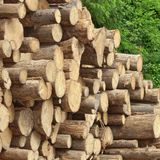 Timber Harvesting For Lumber Industry Or  Wooden Housing Constru Royalty Free Stock Photography