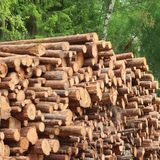 Timber Harvesting For Lumber Industry Or  Wooden Housing Constru Stock Images