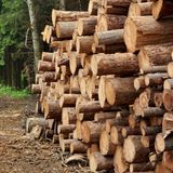 Timber Harvesting For Lumber Industry Or  Wooden Housing Constru Royalty Free Stock Photos