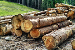 Timber harvesting Royalty Free Stock Image