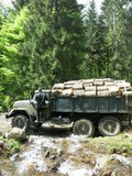 Timber harvesting Stock Photography