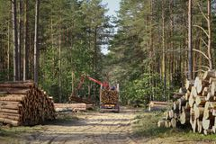 Timber harvesting and transportation in forest.