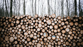 Timber Harvesting Stock Images