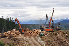 Timber hauler. A timber hauler drags Pinus radiata logs to a loading site at a forestry block in Westland Royalty Free Stock Photo