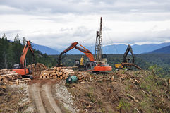 Timber hauler. A timber hauler drags Pinus radiata logs to a loading site at a forestry block in Westland Stock Image