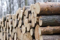 Timber heap in the woods Stock Image
