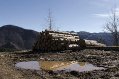 Timber in a hill in the Rhodope Mountain Royalty Free Stock Photo